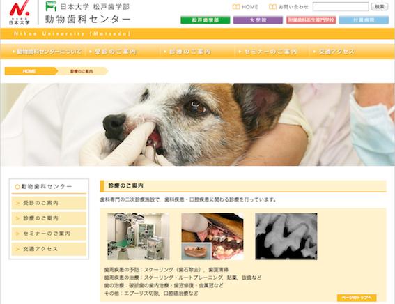 動物の歯科治療を行う日本大学松戸歯学部動物歯科センター