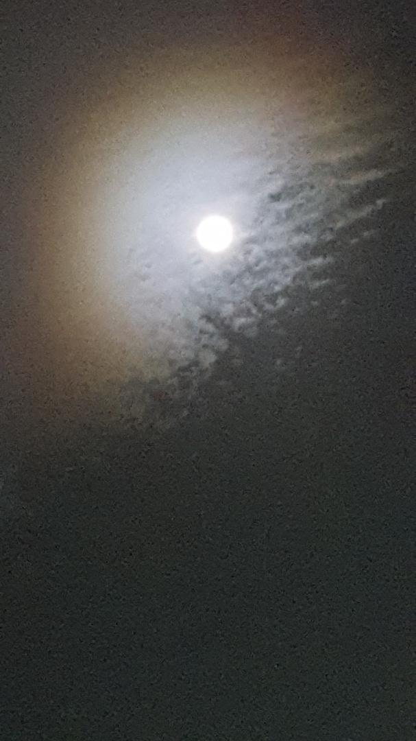 ★桜花爛漫♪都内オススメの桜の名所4選