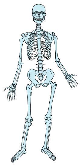 そもそも、椎間板ヘルニアって?