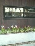 花壇に春を沿えて