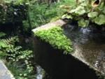 京都まで☆日本庭園を拝見へ