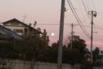 でみる間に昇る月♪( 〃▽〃)