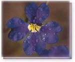潜在意識を知る方法 「花カード診断」