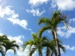 ハワイに行って来ました(^o^)v