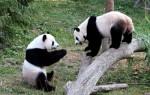 SEO業界を席巻するパンダ