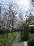 春よ来い! 桜っていいですよね
