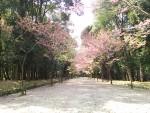 滋賀県の近江神宮へ行ってきました
