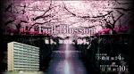 A159.桜満開、パークハビオ目黒リバーサイド誕生。