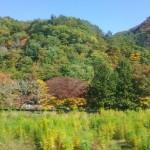秋の特産物・観光果樹園のYouTube動画、おつくりします。【東京の動画マーケティングコンサルタント】