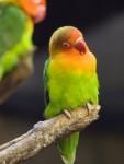 鳥好きにはタマらないとっても可愛いユーモラス動画♡