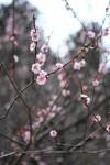 満開の桜が見える物件は価値があるのか?