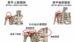 肩甲骨の運動を点検していますか?