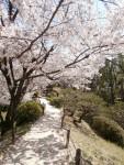 今年の桜~✿ここは何処~?