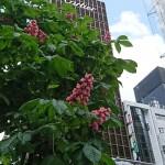 「マツコの知らない世界」屋上はちみつの花のこと