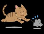 子年(ねずみ年)は招き猫なしの年