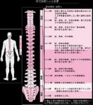 頸髄損傷者に対するリハ研修を振り返る