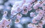 ★自粛の日曜日〜自然の摂理は厳しくも美しい