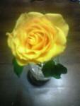 「黄色いバラ」