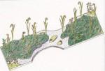 「ライステラス・ガーデン(棚田の庭)」デザイン画