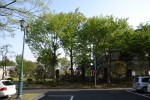「樹齢の長い木」 老人ホームのヒーリングガーデン