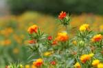 和のウェルカムボード  アイデア集その2 「紅花和紙」の紅花