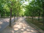 大阪城公園風景 2  森林浴で癒されます!
