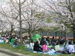 人は桜の下では、皆笑顔!