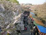 大阪造幣局の桜通り抜け 6 上から見る造幣局通り抜け!
