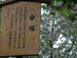 大阪名物 造幣局の桜通り抜け 「幸福」という名前
