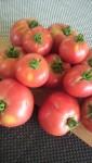 真っ赤な大玉トマト