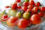 武蔵野ふれあい農園 トマトの収穫