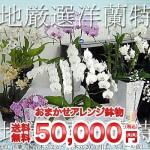 【御礼花】胡蝶蘭ギフト 50000円