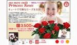 母の日企画「プリンセスローズ5号花鉢」