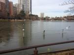 不忍池も凍っています。