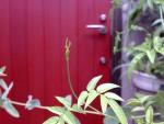 既存アルミドアからつけかえた 赤い木のドア