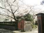 東京・目白 「学習院大学 『正門と桜』」