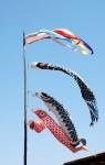 農業コミファーム  鯉のぼり 2013.5.4