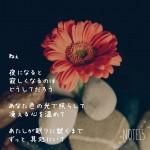 Photo Poem 夜
